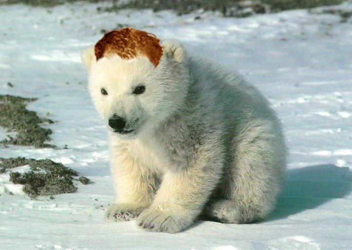 Polar bear without fur - photo#8