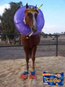 seahorse1 copy